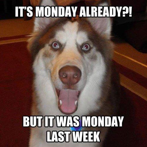 Monday Again!! #vieravet #Monday https://t.co/uGspGAZ21Y