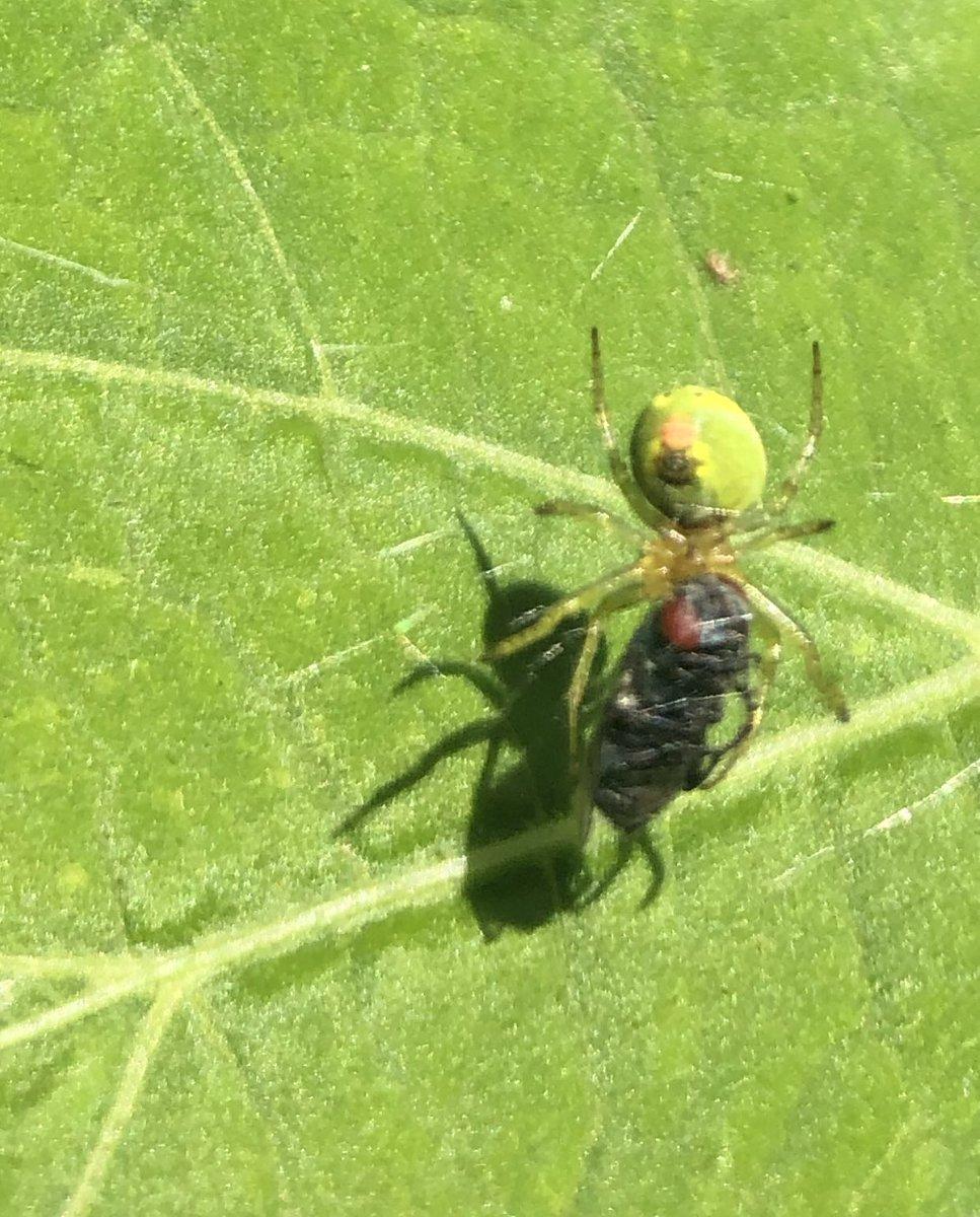 Ein guter Tag für Spinnen. Schlechter Tag für Schmeißfliegen. https://t.co/gKTNAL53lN