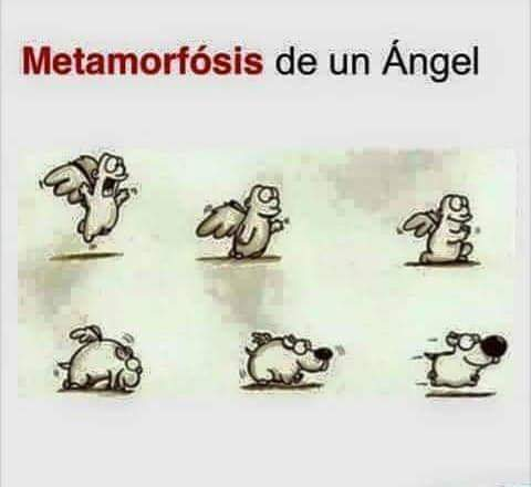 RT @Perroslovers: La metamorfosis de un ángel 😍 https://t.co/vNSUSXWPjJ