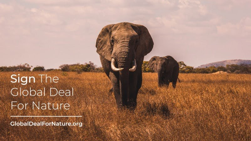 I just signed the #GlobalDealForNature calling on world leaders to protect half of our lands and seas. Please join me! Sign the petition at    #SaveTheWorld #SaveWater #climatechange #wakeup #doyourpart