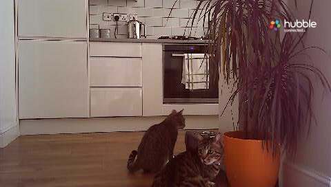 Cat burglar update: Currently having breakfast with my cat. They seem to be pals. Think he's moved in. https://t.co/maih4YbmrX