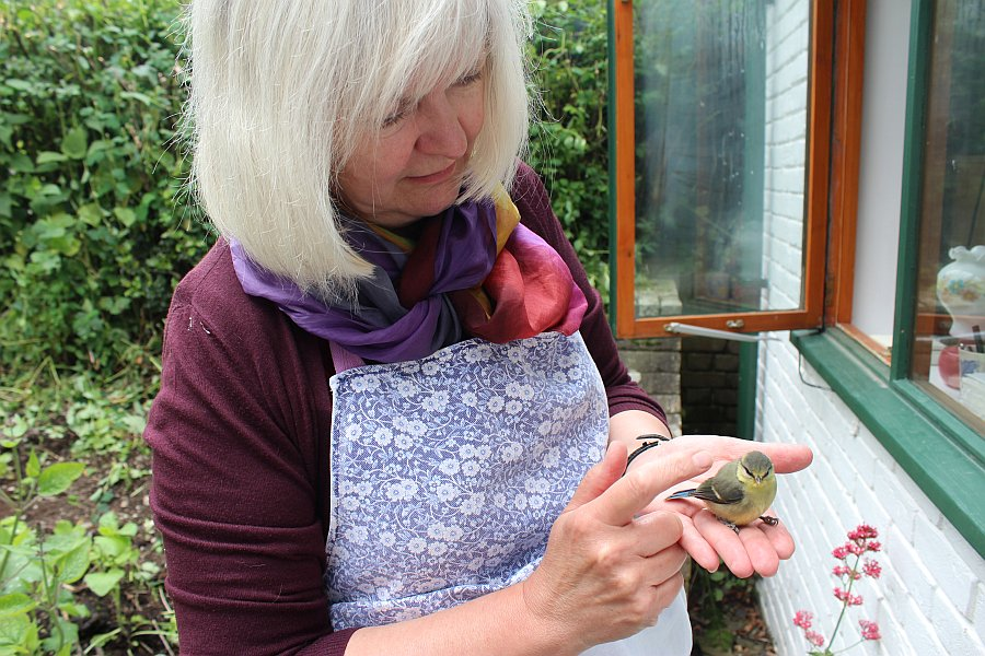 Image for A poor little blue tit flew in to the window and stunned itself! But fear not, it was rescued by the wonderful bird whisperer and returned to the bush to recover. #FridayFeeling #birdwatch #kindness #wildlife #BleddfaCentre #Powys #RealMidWales https://t.co/p5hbtX6MzN