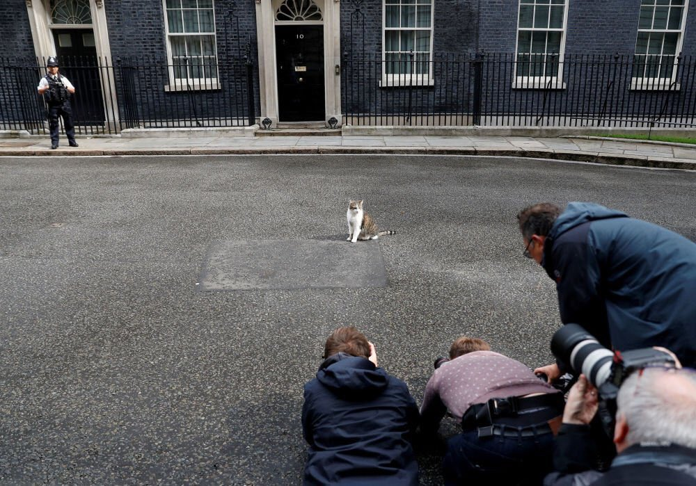 RT @Number10cat: Strike the pose... (Photo: Peter Nicholls, Reuters) https://t.co/sjXJvDlnE2