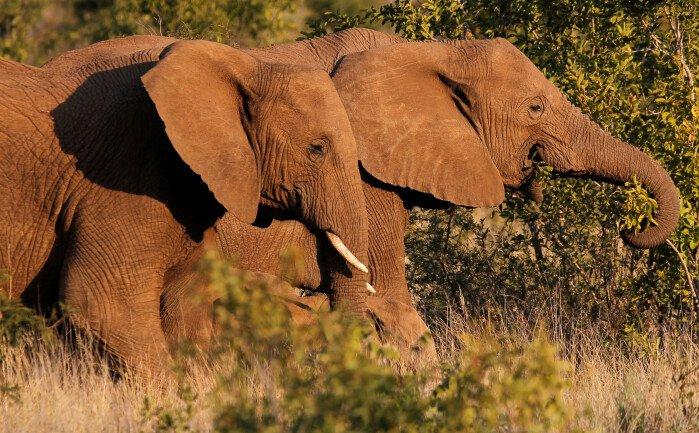 test Twitter Media - Bevæbnet styrke vender udvikling i reservat: Nul elefanter dræbt af krybskytter https://t.co/jUPoCNKBw3 https://t.co/beNeNGdLSi
