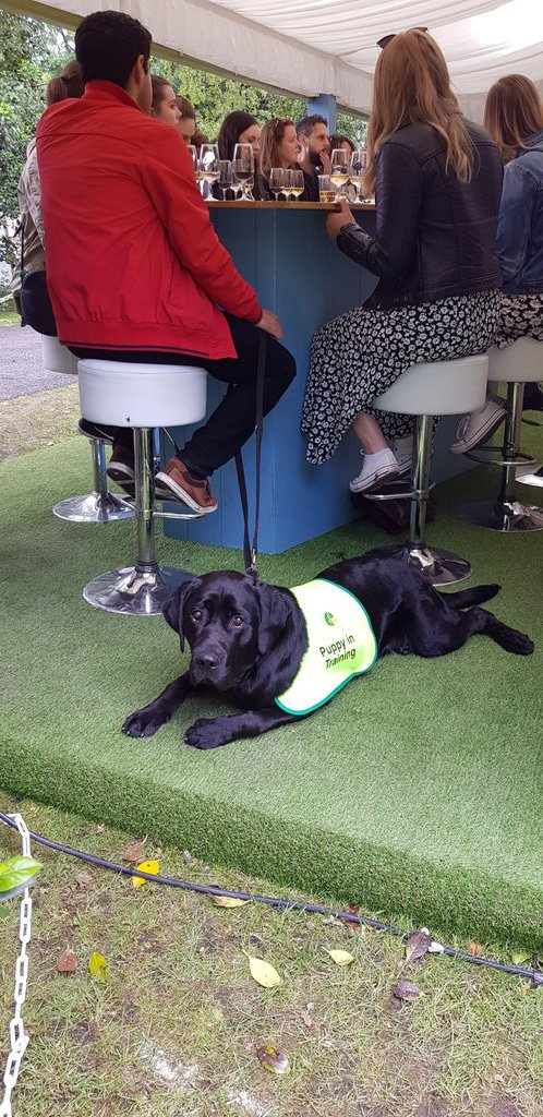 hes not so interested in our @GBvins masterclass at #Taste19  @irishguidedogs (@LynneCoyleMW) https://t.co/ovyNK6nS64