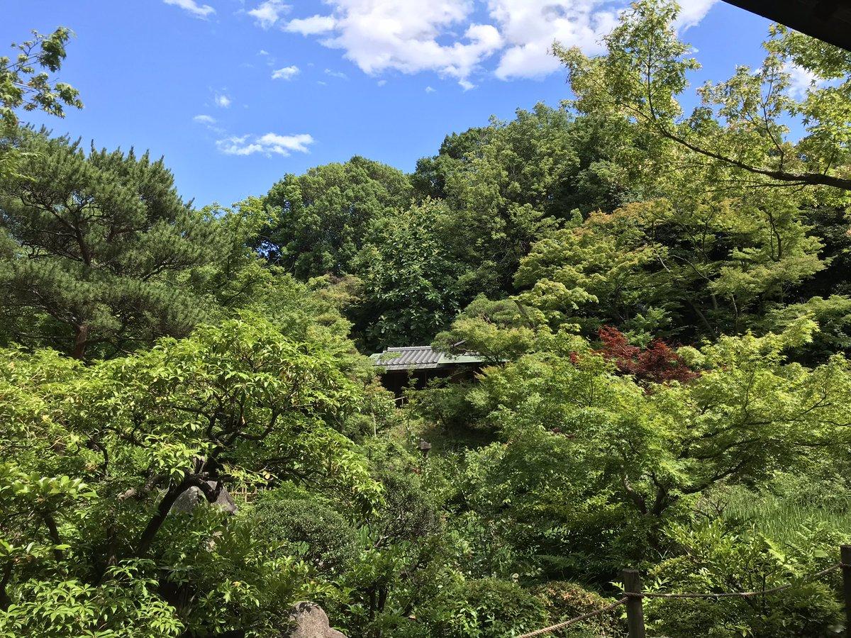 test ツイッターメディア - 根津美術館の庭がすごい。都会の真ん中にこんなうっそうとした庭があるなんて https://t.co/fIIFkuGpJK