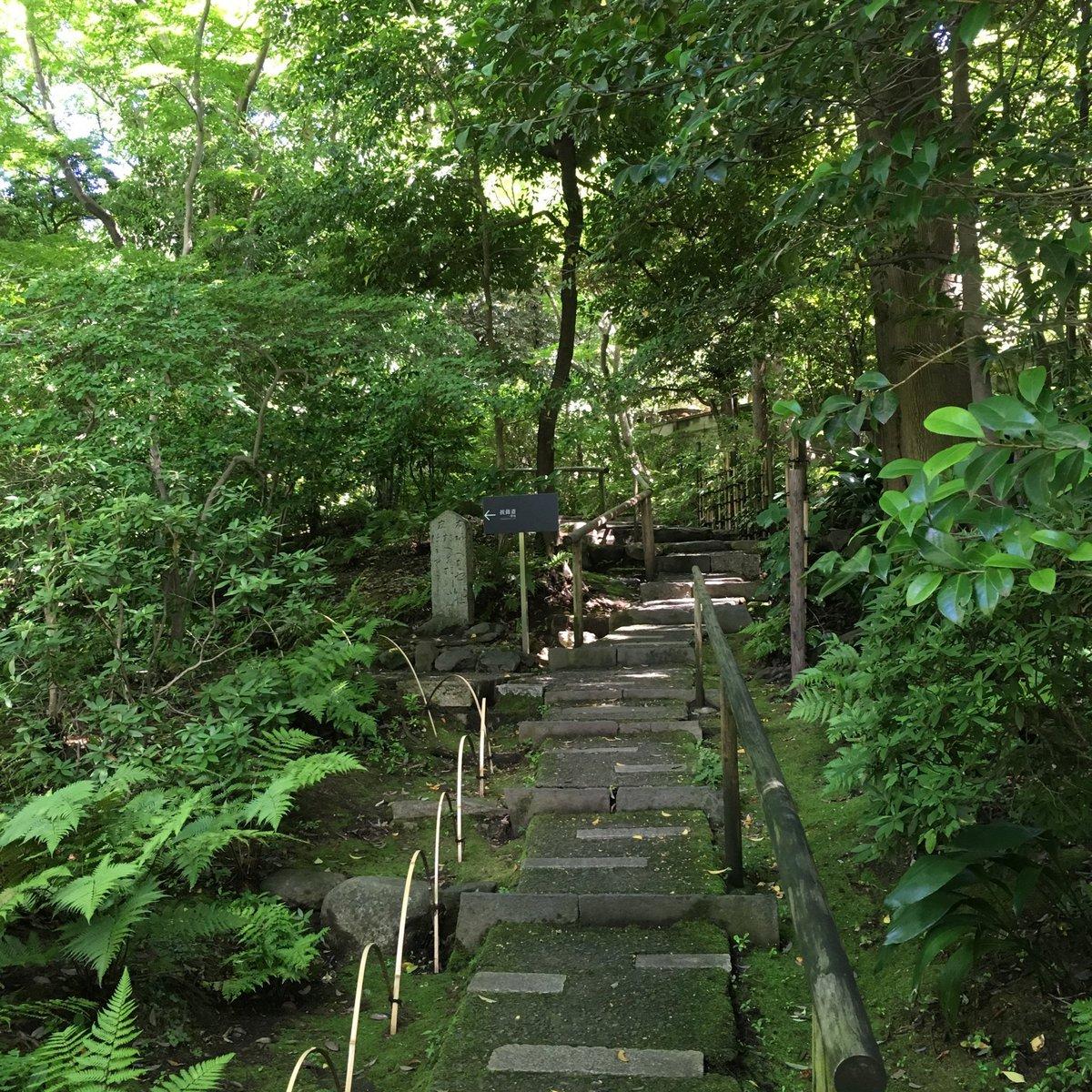 test ツイッターメディア - 昨日の雨で空気が澄んで気持ちの良い一日。暑すぎることもなく、元気よく向かった先は根津美術館。庭園は森の匂いに溢れていた。 https://t.co/wCkcBtXhJD