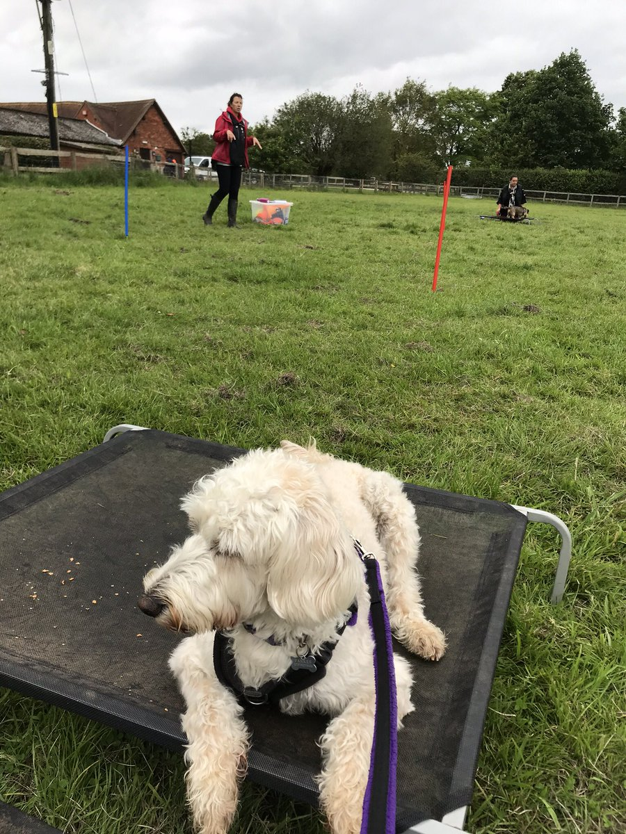 test Twitter Media - Boundary Games training. How to settle. Daisy did very well.@Myhappydoguk @willowsvets https://t.co/X5eTI5OVJx