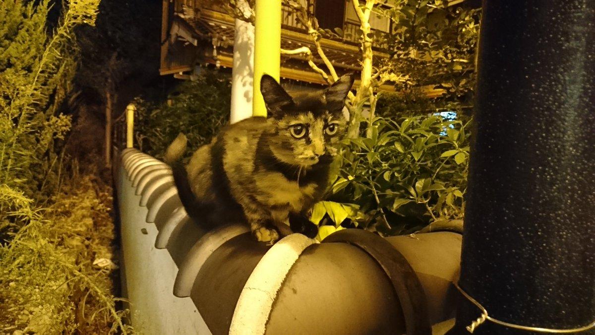 test ツイッターメディア - 渡鹿野島の猫その2 置物かな?と思ったら猫だった  サビ猫だからメスかな。 警戒心ゼロ  #渡鹿野島 #猫 https://t.co/y9Hk1CIomy
