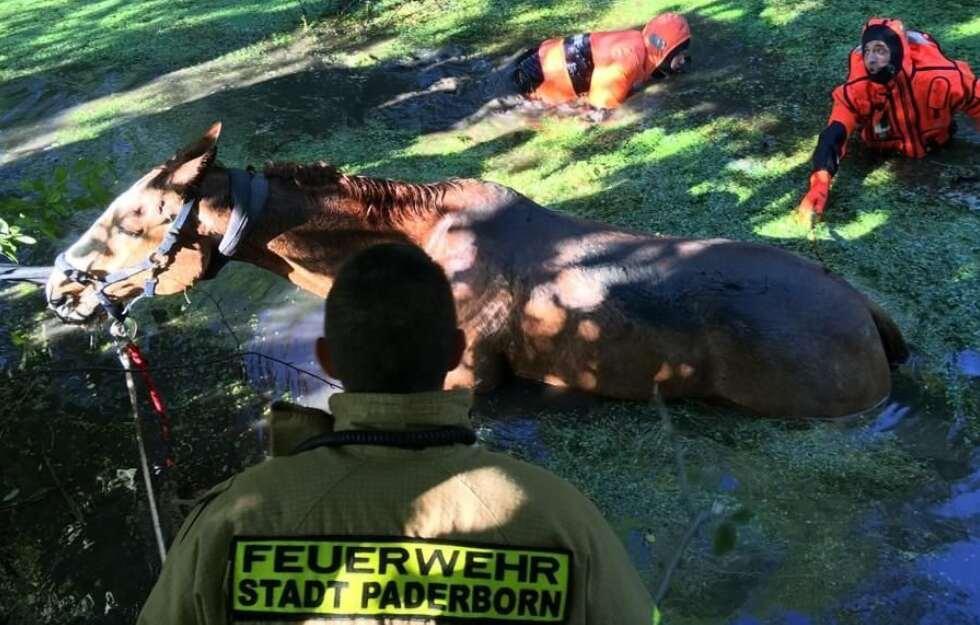 Spektakuläre Rettung! Feuerwehr zieht Pferd aus dem Sumpf. #Paderborn https://t.co/36JHb4AMP1 https://t.co/mWp6QKz8w1