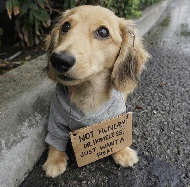 Give him a treat!!! #vieravet #givehimatreat #cute https://t.co/vS3QbeyqfM