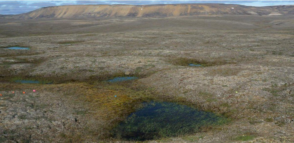 RT @Reuters: Scientists amazed as Canadian permafrost thaws 70 years early https://t.co/HD7MqDu32Q https://t.co/JDC4gbNSDC