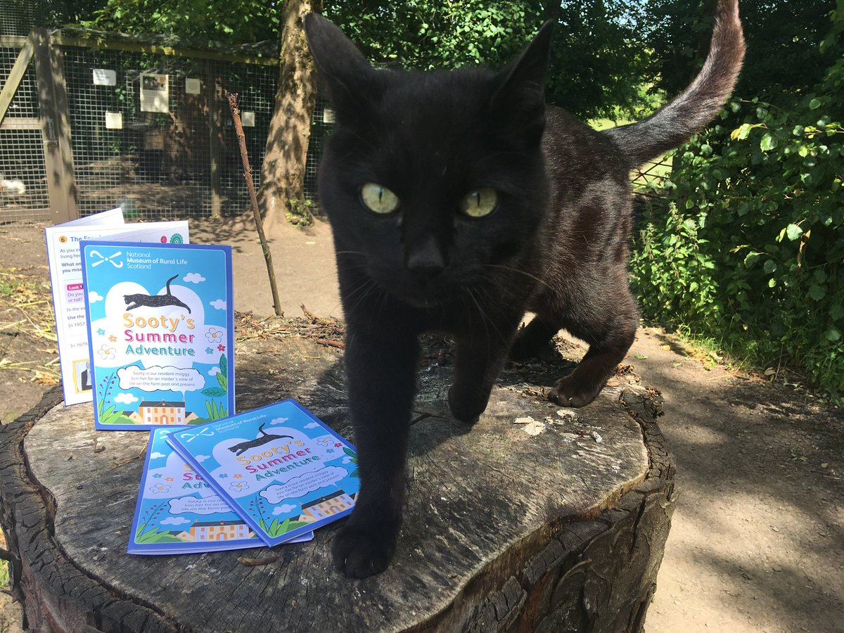 test Twitter Media - 🐈  Join Sooty our resident moggy for a cat's eye view of life on the farm past and present in Sooty's Summer Adventure Trail.  #SootysTrail #nmsrural https://t.co/Mf4LDDYIhG  (4/6) https://t.co/ek5POjDC54