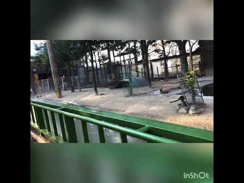 test ツイッターメディア - 東武動物公園 冬のイルミネーション / https://t.co/vHmBKJogSd / 東武動物公園 冬のイルミネーション  AI #Happiness #アヒル #ペンギン. https://t.co/OKLcMyFUCy