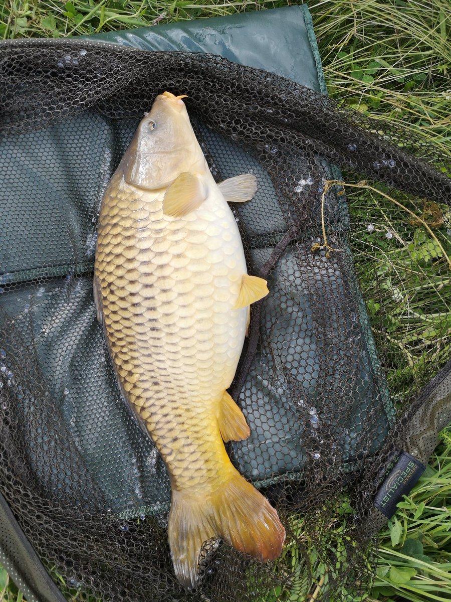 Nice clean low double to start the evening 👌#carpfishing #Fishing #<b>Common</b>carp #carping htt