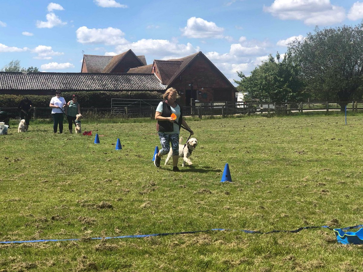 test Twitter Media - Daisy had great fun at her doggy 'spawts day'. Lots of tricks and games.@Myhappydoguk @willowsvets https://t.co/ZXG8Wd3d45