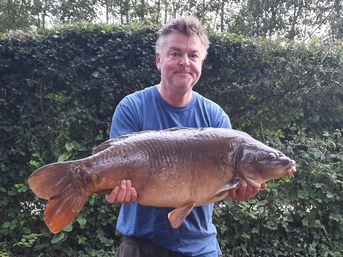 A lovely morning surprise for dad this morning! 25lb of <b>Beau</b>tiful Linch Hill mirror #carpfish