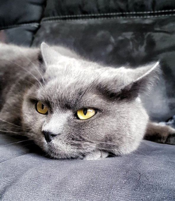 Today\s my cat\s birthday~  Happy birthday to my fluffy prince(ss)