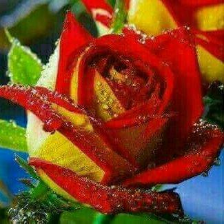 RT @Julia75990331: Buenos días gente buena!!! ❤️🇪🇸❤️🇪🇸❤️🇪🇸❤️🇪🇸❤️🇪🇸 Feliz Lunes!!...