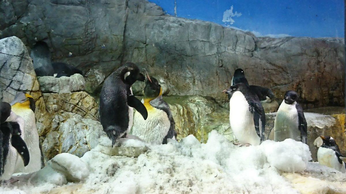 ペンギン見てクラシカロイド7話を思い出してた私(BGM皇帝)