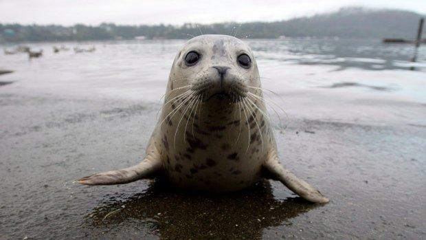 Selfies with seal pups a no-no: U.S. science agency