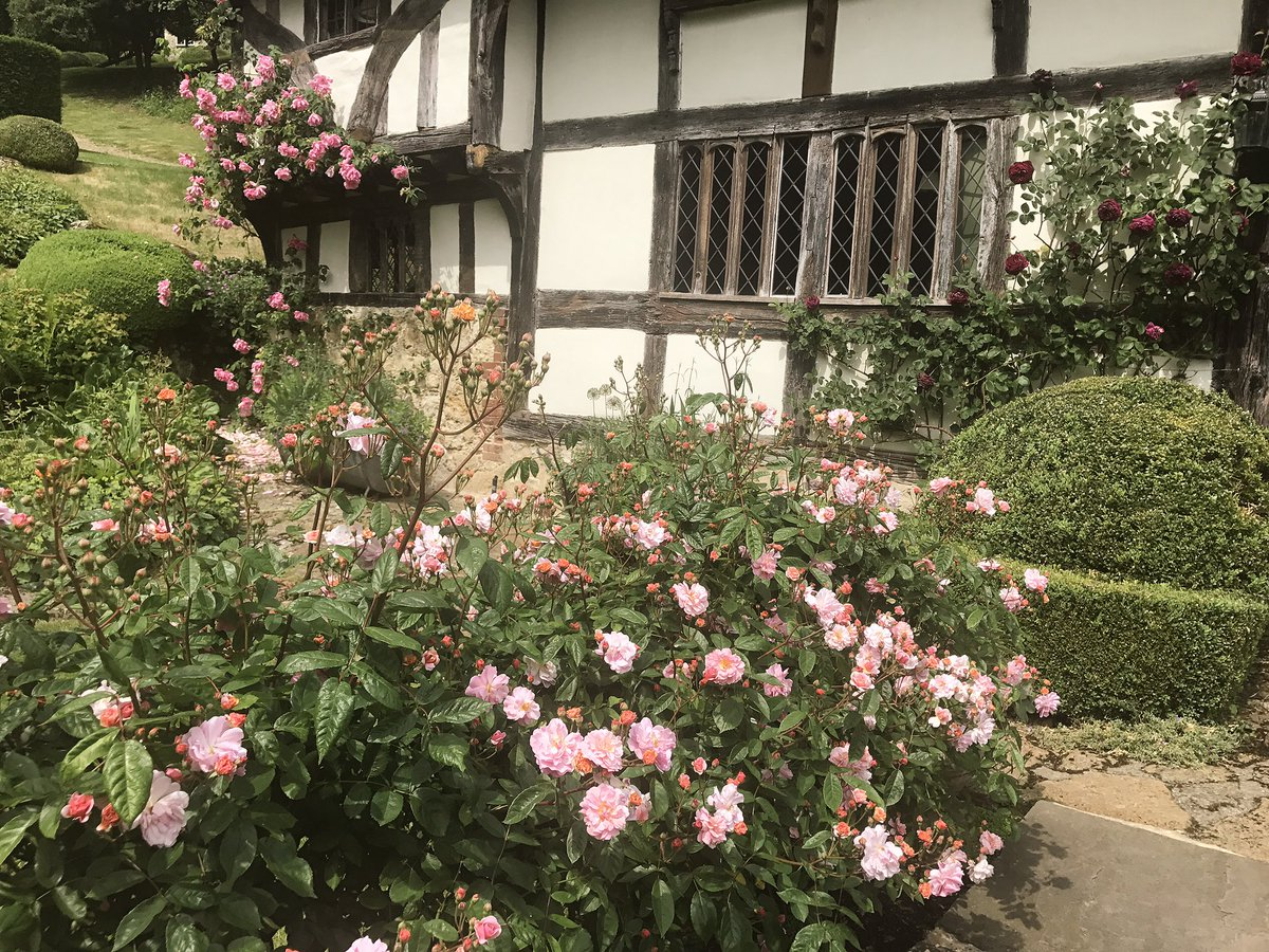 My Cottage Garden blooming with Roses Today ???????????? https://t.co/6NIivxPhcF