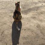 おはようございま〜す( ´ ▽ ` )にゃ子ちゃんの影がトトロになりました🎶