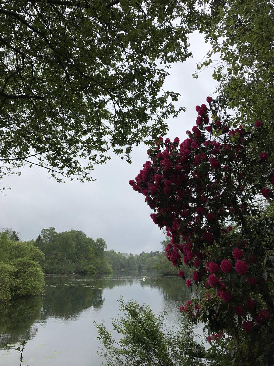 Some much needed rain on the reserve this morning. #carpfishing #nature #<b>Wildlife</b> https://t.c