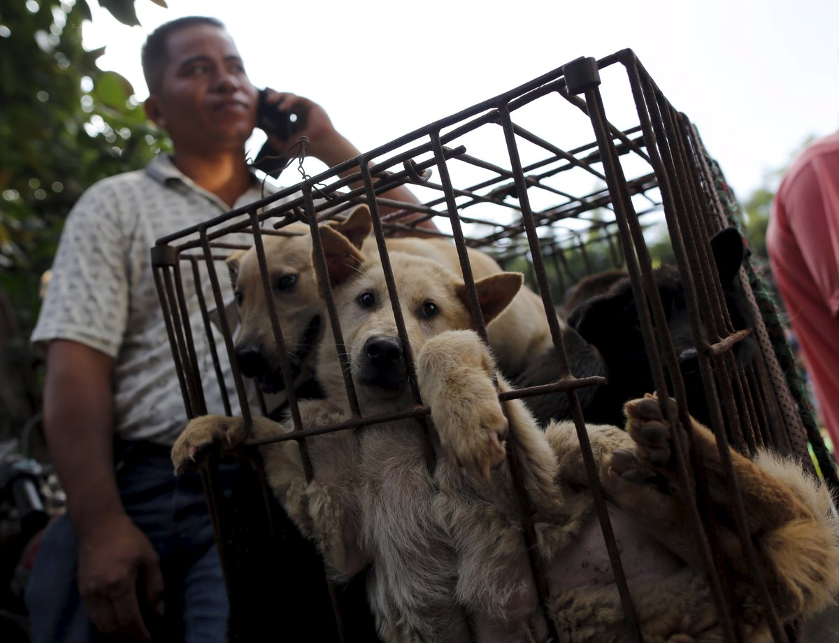 Chinese officials set to ban sale of dog meat at annual festival