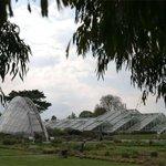 UK survey finds 28,000 plant species for medical use