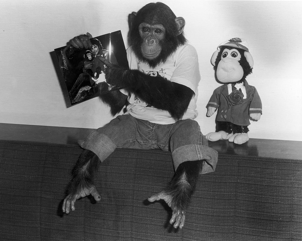 A stop-motion movie about Michael Jackson and his pet chimp Bubbles could be on the way. https://t.co/YZRhJDkjji https://t.co/SJm9SNe0oi