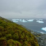 Thanks to global warming, Antarctica is beginning to turn green