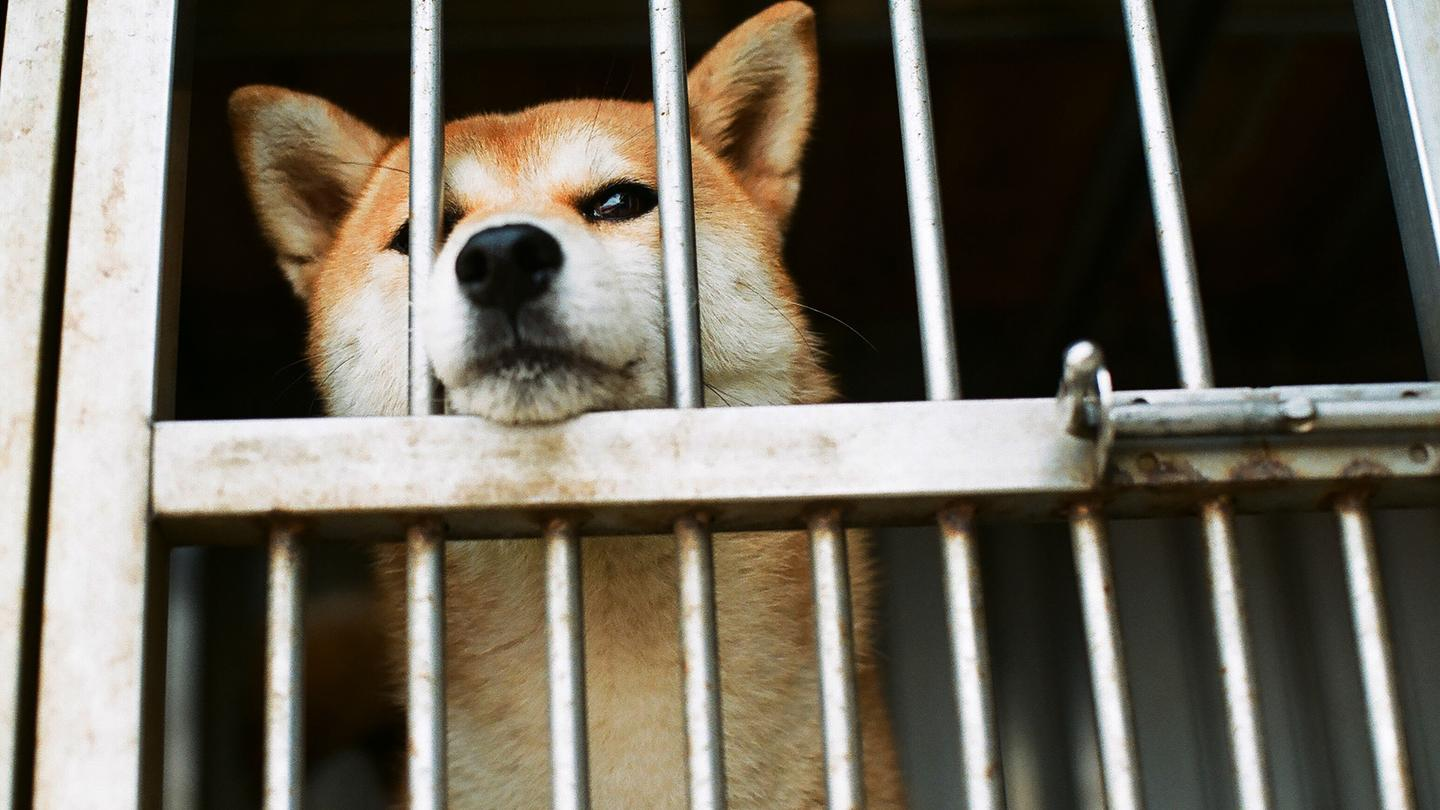 Reports emerge that dog meat will finally be banned at Chinese food festival https://t.co/jHXfc34Q9X https://t.co/FwkQUeZFSB