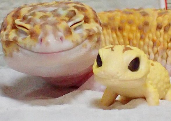 Smiley gecko gets toy gecko friend, smiles forever. https://t.co/giZf9GB2LR https://t.co/FaMrwykdB8