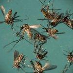 Virus zika mampu rawat kanser otak?