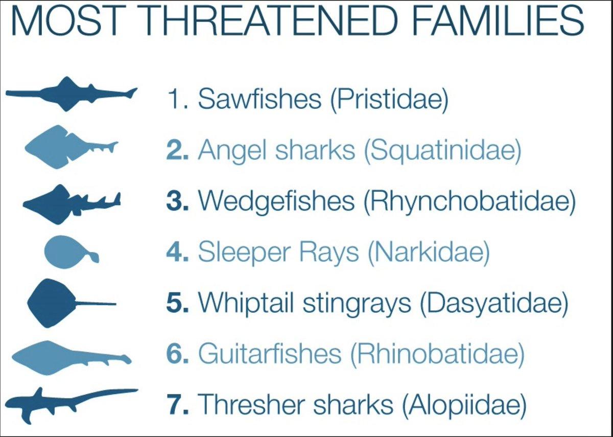 #EndangeredSpeciesDay