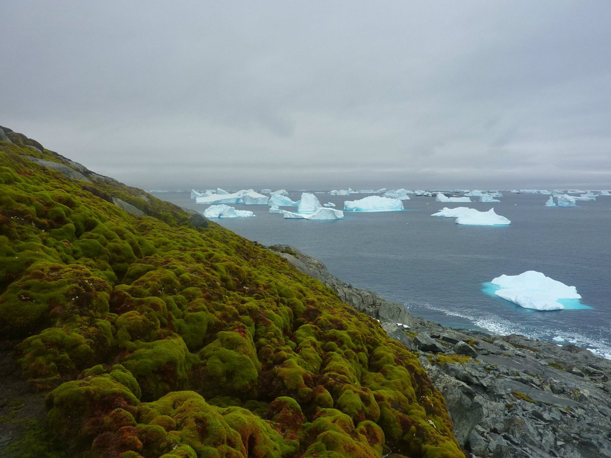 Thanks to global warming, Antarctica is starting to turn green