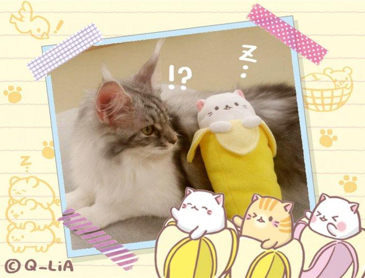 ばなにゃがふかふかのベッド?を見つけてくつろいでいるみたい。みんな今週もおつかれさまにゃ〜!! #ばなにゃ #banan