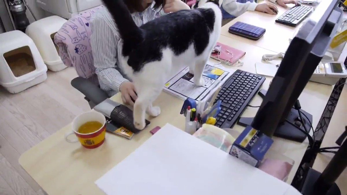 A Japanese company is encouraging people to bring their cats to the office to help them cope with stress and fatigue
