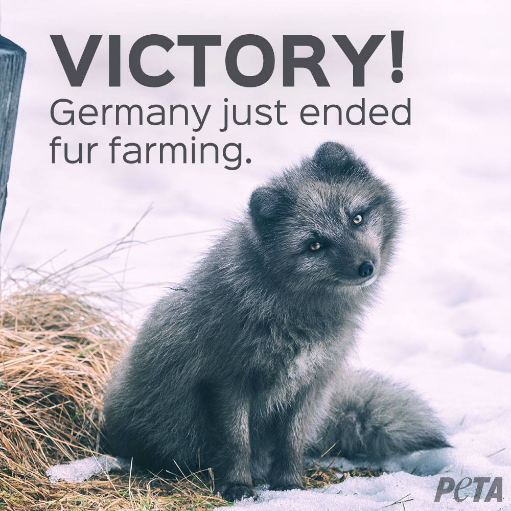 fur farming the fur trade Many in the fur trade now readily acknowledge that activists who protested so loudly had a point: like pig or chicken farming, fur farming is about keeping animals in captivity their entire lives and then killing them.