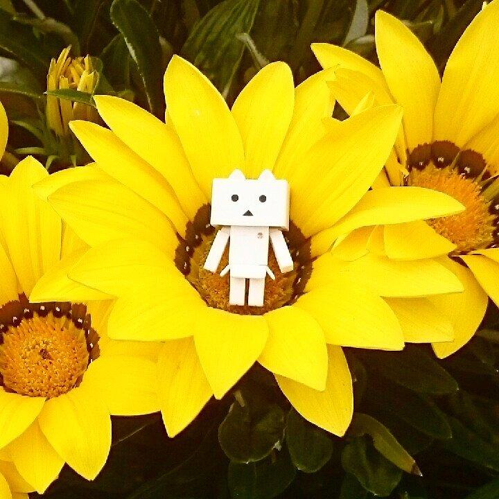 今日は暑かった・・・#花#flower#ダンボー#ニャンボー#にゃんぼー#danbo#nyanbo