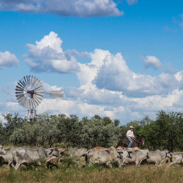 Aussie farmers monitoring cows from space