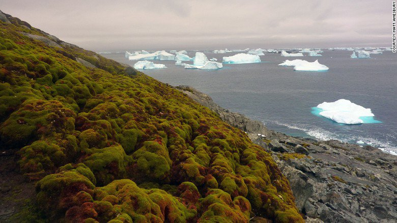 Rising temperatures are turning Antarctica's icy landscape green with thick banks of moss