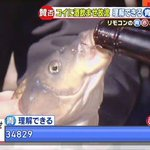まさに故意?鯉に酒を飲ませる行事がまるでサークル新歓の大学生www