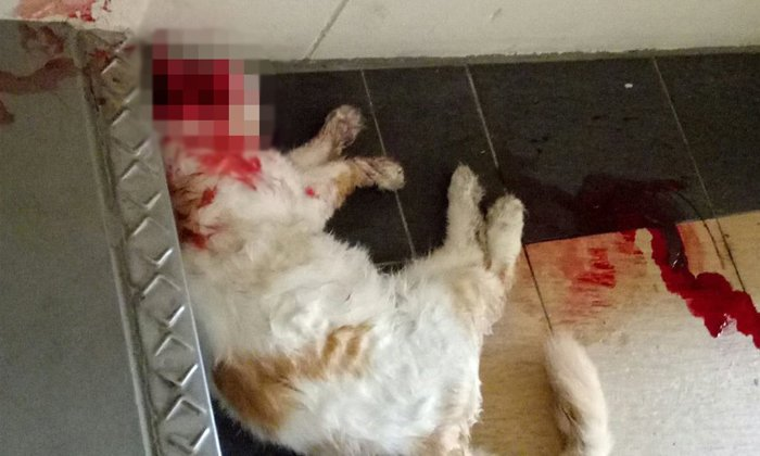 Woman finds pet cat dead with head smashed, body thrown down stairs at Bukit Batok