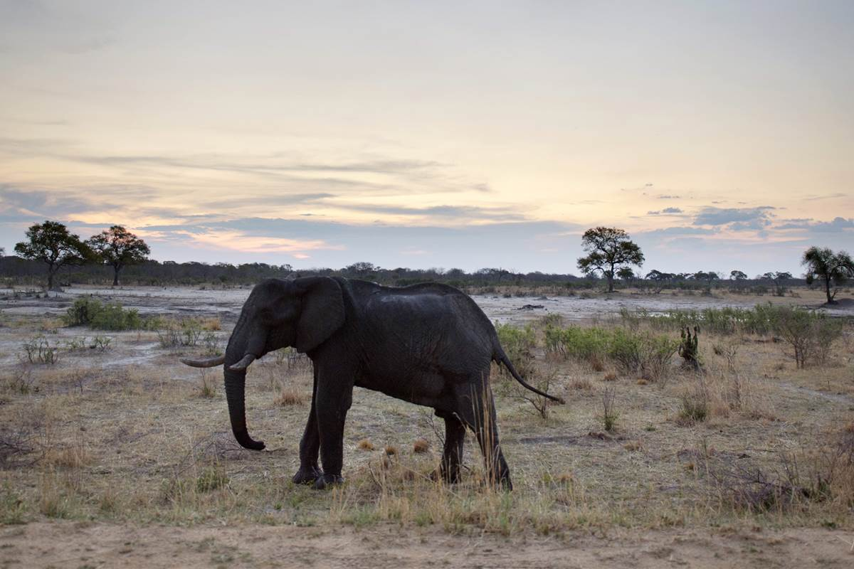 South Africa big game hunter dies after elephant falls on him