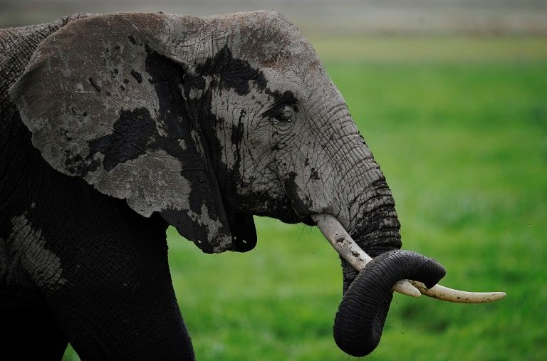 Elephant crushes S. African hunter to death: reports