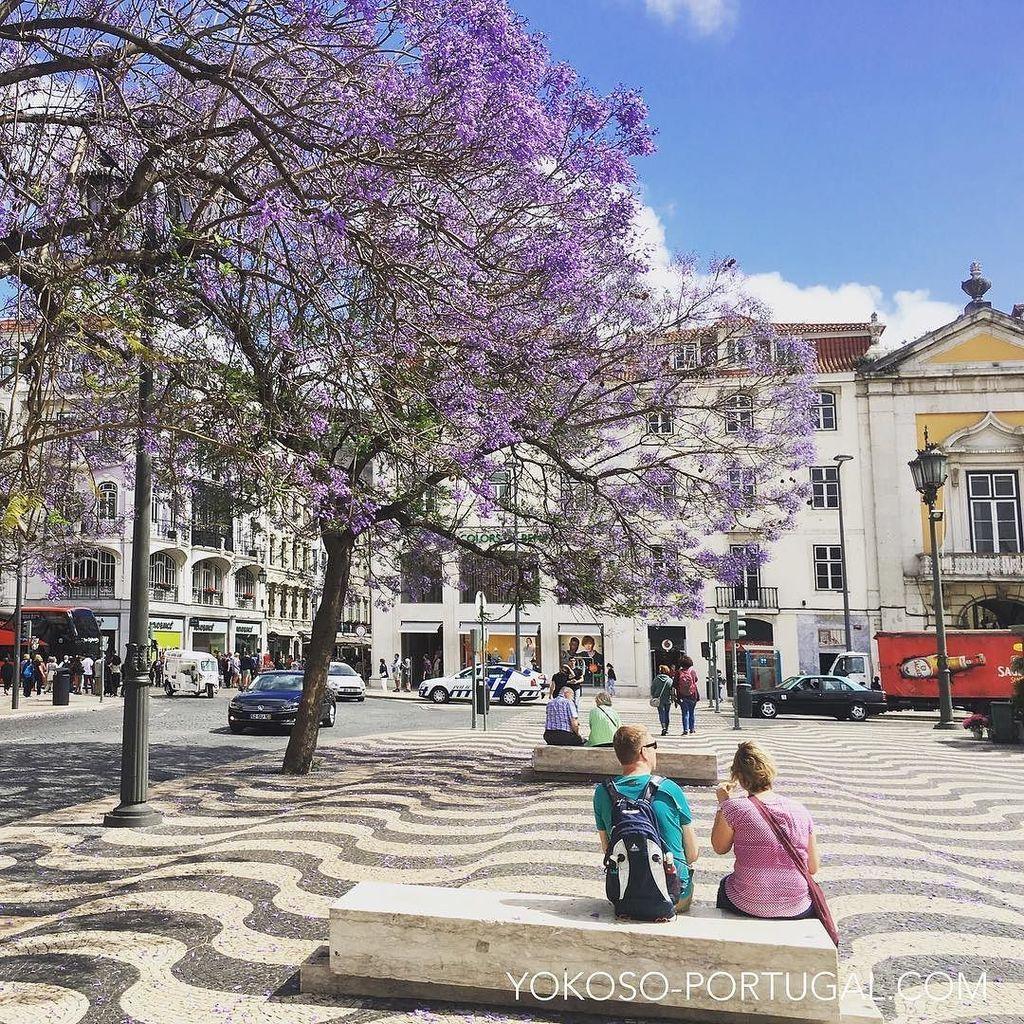 test ツイッターメディア - ロッシオ広場のジャカランダ。リスボンは暑い日が続いています。 #リスボン #ポルトガル https://t.co/qvcuPRornN