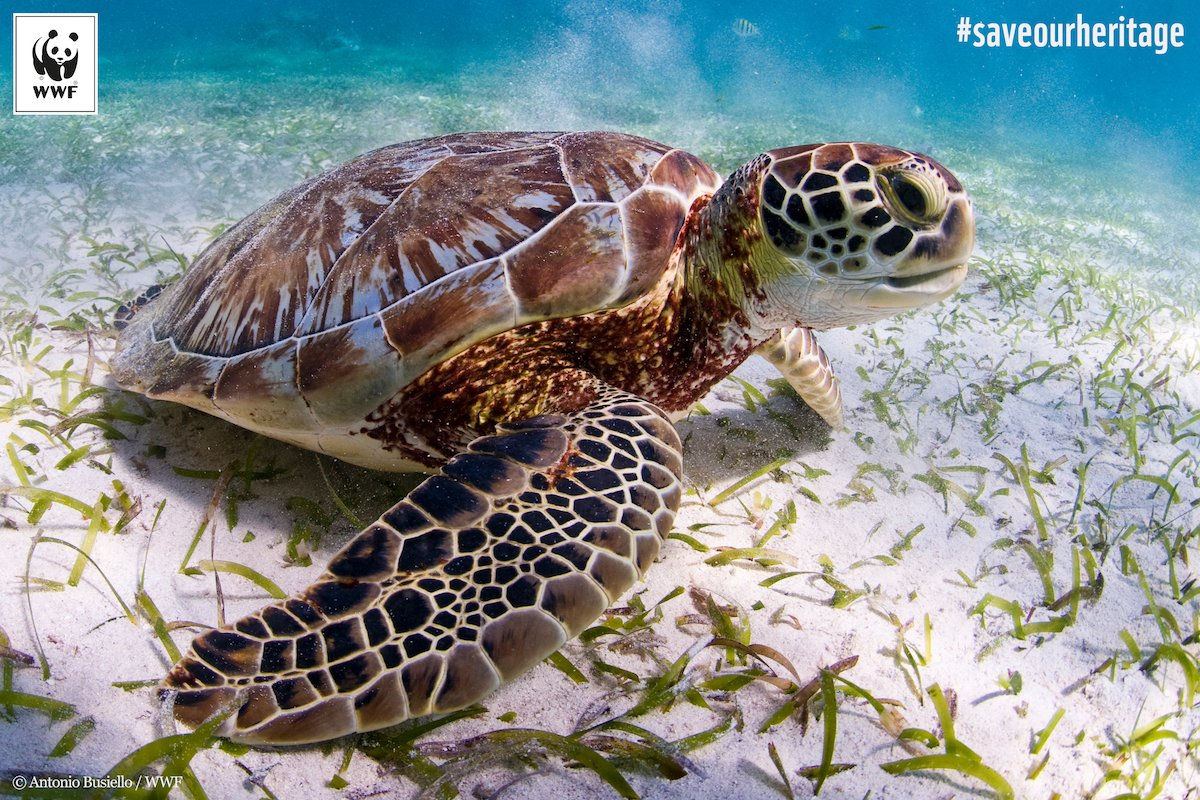 test Twitter Media - Marine turtle population in Belize is threatened by offshore oil & coastal development.  Act this #WorldTurtleDay at https://t.co/YzsI97hicA https://t.co/zIujQqzwY7
