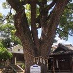艮神社 時をかける少女で出てきた神社らしい隣は樹齢900年のクスノキ